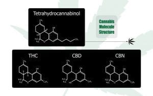 Cannabis molecule structure graphic