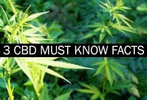 3 CBD Must Know Facts