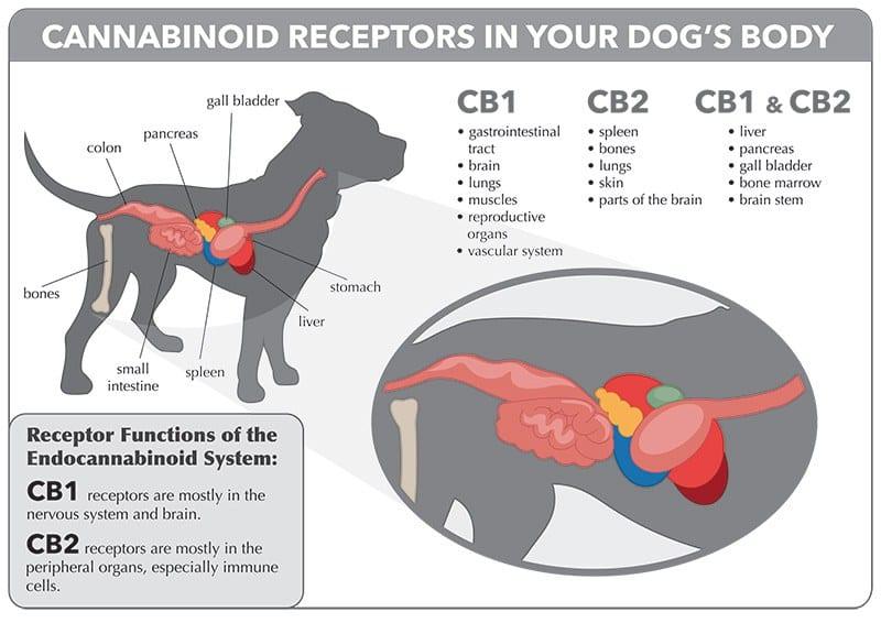 pet endocannabinoid system