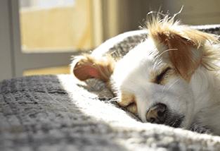 Relax Dog CBD Oil