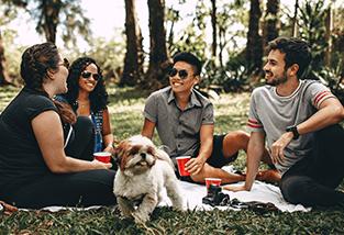Holiday Gatherings Dog Anxiety CBD Oil