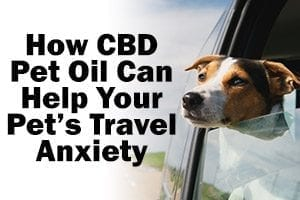 dog hanging his head out the window how cbd pet oil can help your pet's travel anxiety