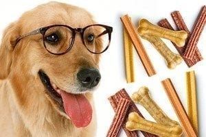 dog with glasses homemade cbd dog treats