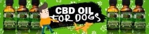 cbd oil for dogs man walking dogs on green background