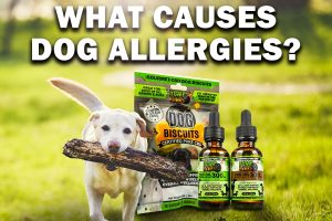 Hemp Bombs CBD for dog allergies