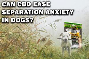 Hemp Bombs CBD For Separation Anxiety