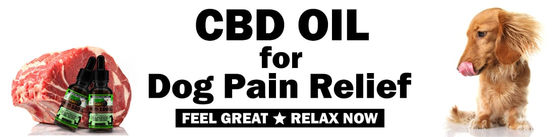 CBD Oil for Dog Pain Relief