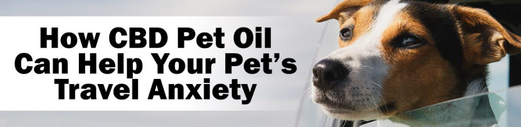 CBD Pet Oil for Travel Anxiety