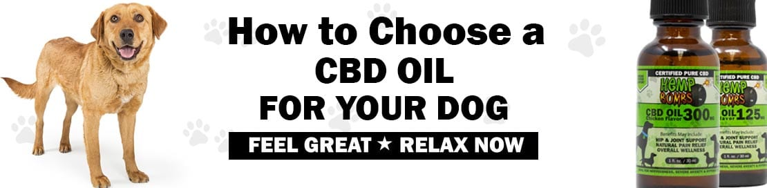 How to Choose a CBD Oil for Your Dog